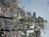江南天池门票(日场)+江南天池滑雪(日场2小时)第三方入园 附赠安吉君澜石语汤池成人票一张