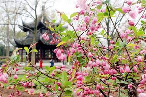 【微攻略】苏州春季赏花攻略