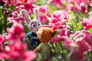 【我是达人】跟着《疯狂动物城》的玩偶CP去看郁金香
