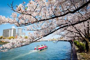 【微攻略】又到一年樱花季,2017日本赏樱最强攻略!
