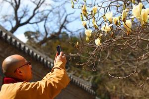 【微攻略】春日游北京,赏花是第一要事!