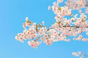 【背着Doughnut去旅游】三月初春,春已来,花未开。