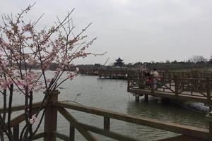 【春季大赏】海湾公园的花吧水吧和艺术吧