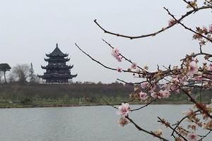 【春季大赏】上海海湾国家森林公园,一个赏梅佳地