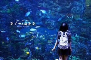 【广州&珠海攻略】吃遍广州名美食,夜宿长隆鲸鲨馆