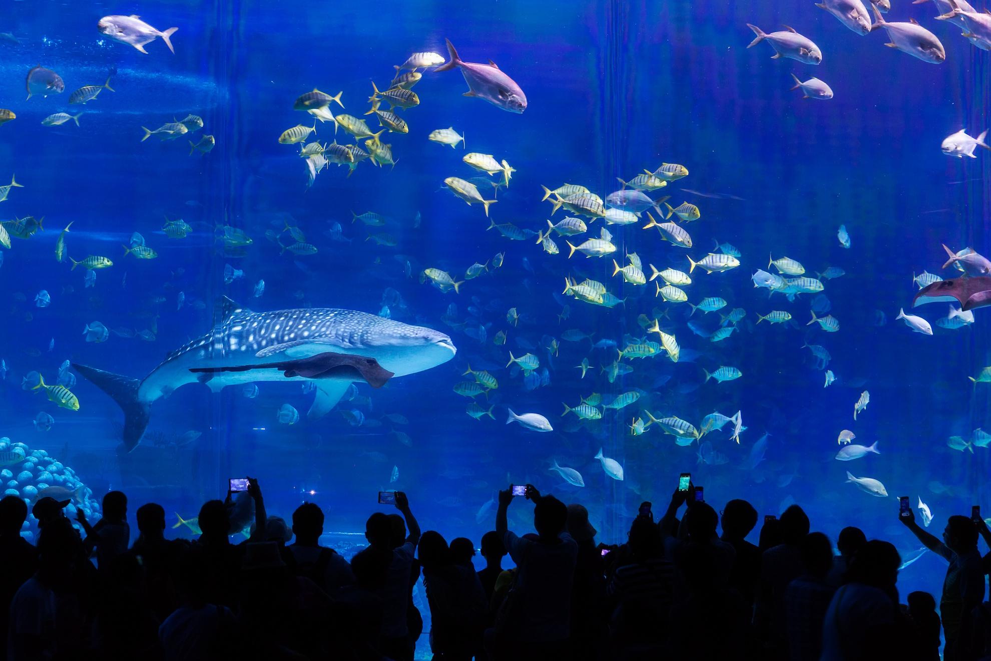 去珠海长隆海洋公园_珠海图片大全_珠海风景图片/景点照片/旅游摄影【驴妈妈攻略】