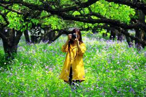 【我是达人】#春游宿迁#鸟宿池边,此生不迁