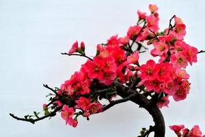 【我是达人】神州鸟园浪一圈:发现海棠花未眠