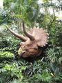广州长隆野生动物世界+长隆飞鸟乐园