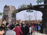 淮安白马湖森林公园