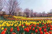 云澜湾·四季花海乐园
