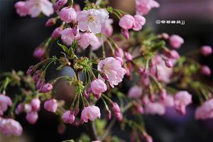 【背着Doughnut去旅行】醉美北京春季赏花攻略