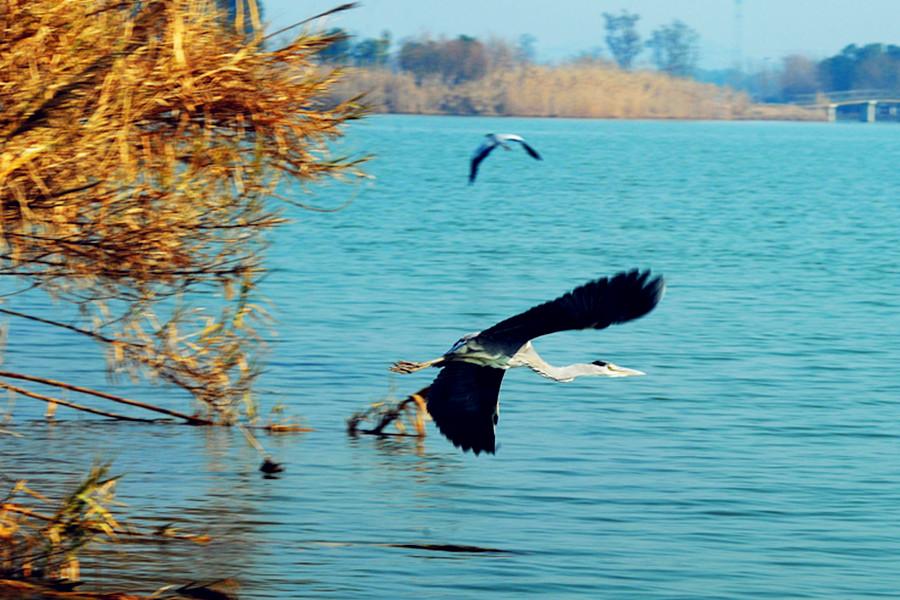 苏州太湖国家湿地公园苏州太湖国家湿地公园桑梓人家桃源人家