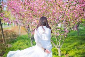 【背着Doughnut去旅行】初春一场樱花雨,我愿温柔相待