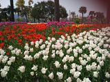 上海大宁郁金香公园
