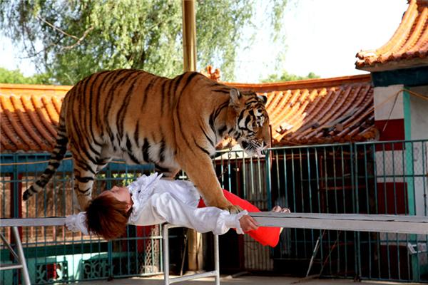 吴桥杂技大世界滑稽动物园