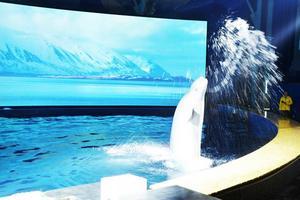 我居然摸到白鲸了!就在上海长风海洋世界!