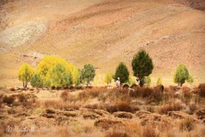 【我是达人】西藏有粮仓,秋收这样忙