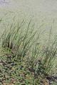 宁波杭州湾湿地公园