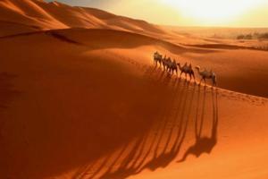 【我是达人】【新疆】库姆塔格沙漠的黄昏驼影