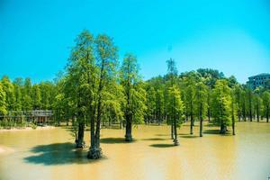 【我是达人】这个初夏,去青山湖享受大自然的恩赐吧