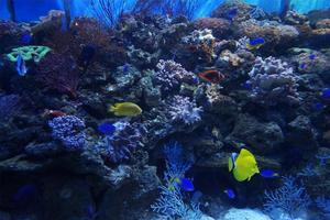 【我是达人】去了一趟海底世界,如果不把这些告诉你,心会痛
