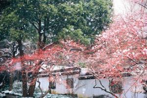 【我是达人】杭州】马年初雪灵峰梅花香雪海