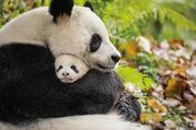 上海动物园