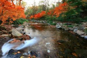 【我是达人】【杭州】九溪烟树,无烟季红枫满涧