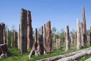 新疆古生态园——汗血宝马训练竟是酱紫
