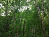 新宾猴石国家森林公园
