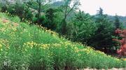 小珠山国家森林公园