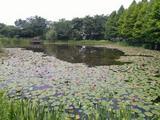 苏州太湖国家湿地公园