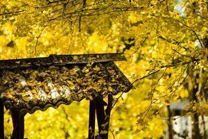 【我是达人】在腾冲的3日秋游——原来腾冲是这样的颜色