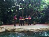 新加坡日间动物园+夜间动物园7:15 PM入园券 儿童票