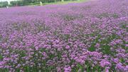 紫海鹭缘浪漫爱情主题庄园
