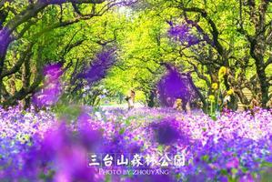 【我是达人】花漾宿迁,邀你来看花花世界