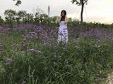香草园(上海薰衣草节)