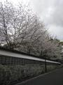 【公主号邮轮-蓝宝石公主号】上海-鹿儿岛-宫崎-上海 6天5晚 4月8日