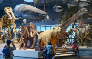 【微攻略】如何正确地带孩子逛博物馆?这6大秘籍多数家长都不知道