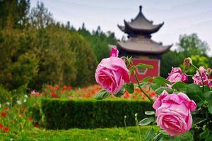 【我是达人】晋南:古典文学点化成的风景