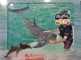 新加坡 海豚园