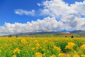 【我要Gopro大奖】七月的青海湖,是一个彩色的梦