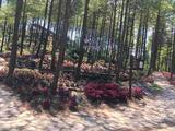 大木花谷景区