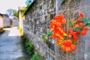 【我是三亚摄影师】西溪南村,黄山脚下避世的文化古镇