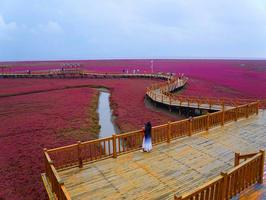 大地织锦秀,五彩红海滩
