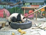 广州长隆大马戏+长隆动物世界
