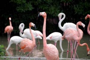 【INMIX免费体验】上海野生动物园