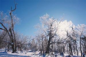 【我是达人】✿南方姑娘一路向北——LostinWinter(北京、哈尔滨、雪乡、大连)
