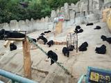 青岛东方熊牧场